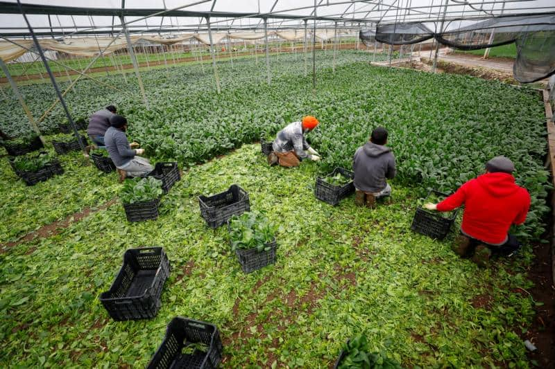 Italy grants temporary residency to migrant farmworkers
