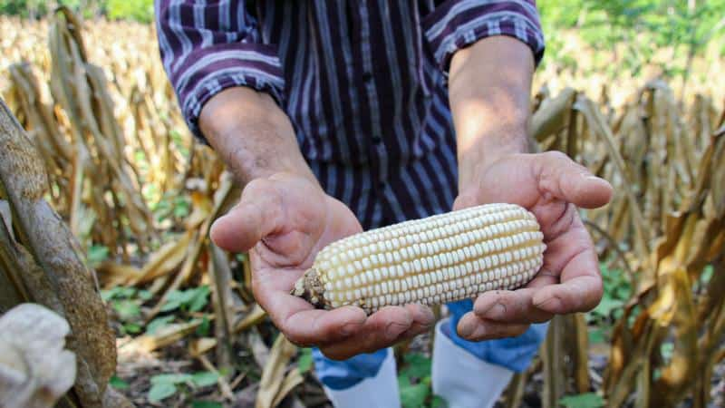 CRS unveils hunger awareness campaign as pandemic hinders access to food