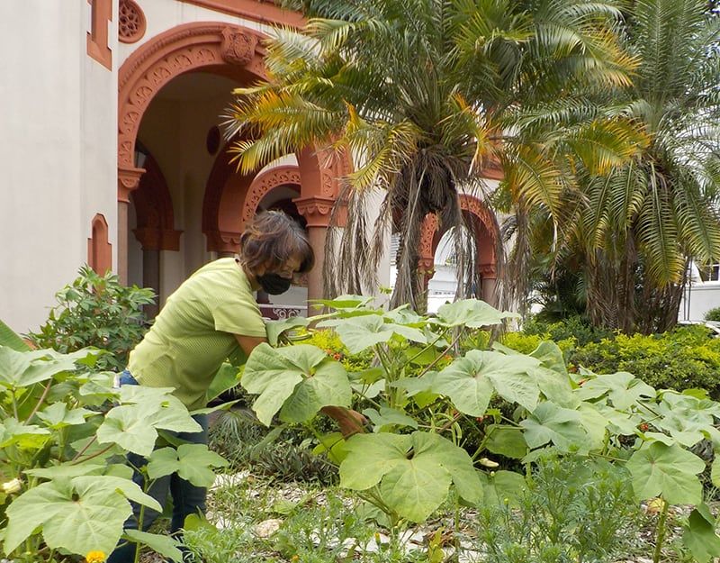 Church in Trinidad advocates planting crops to boost food security